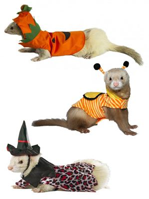 Halloween Ferret Costumes